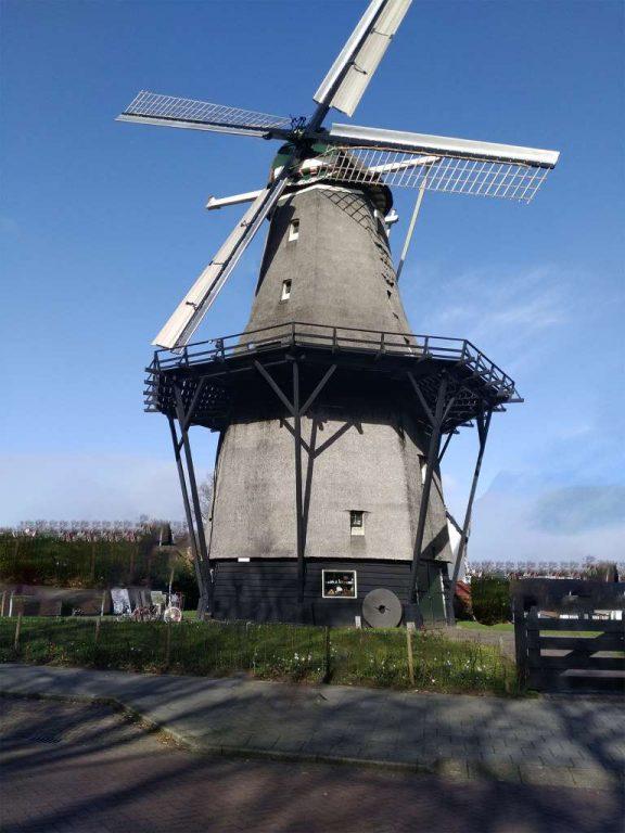 dutchwindmill