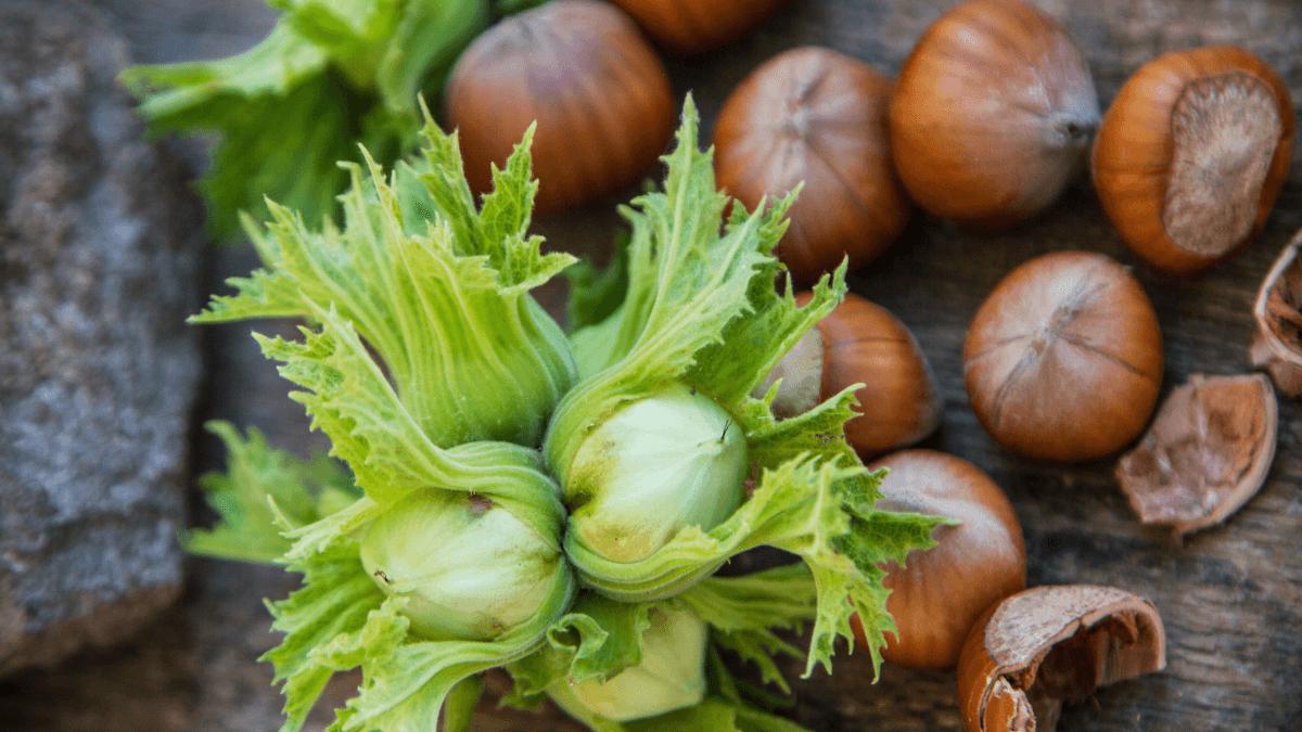 New Products- Choco-Hazelnut & Neutral
